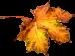 autumn-leaf-1-200px